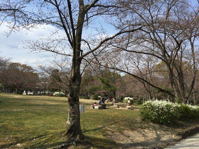 八幡市さくら公園