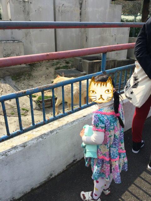 八幡市「子ども動物園」ヤギを見つめる娘