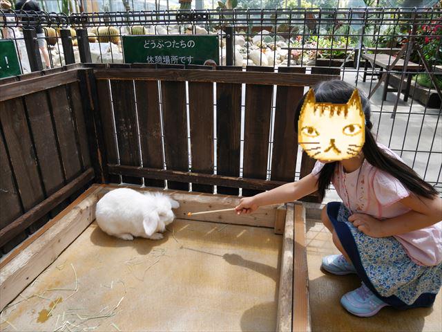 「神戸どうぶつ王国」ウサギにエサをあげる娘