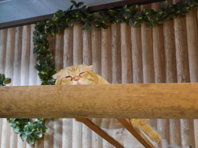 「神戸どうぶつ王国」眠っている猫
