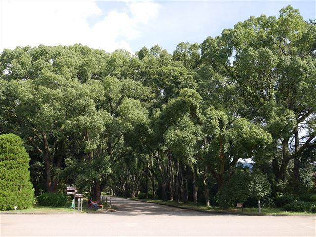「京都府立植物園」くすのき並木