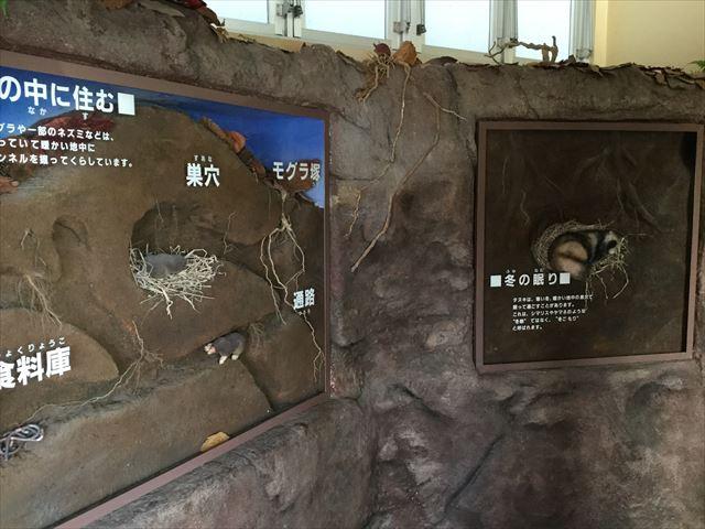 平成榛原子供のもり公園「子供のもり」動物の冬眠