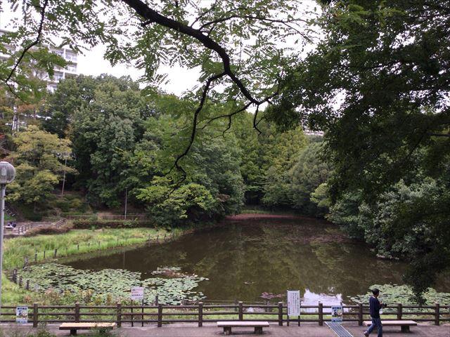 千里東町公園の池