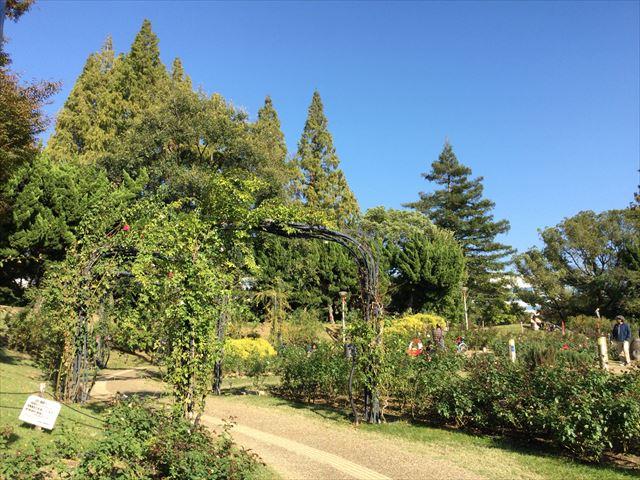 靭公園のバラ園、ガーデン