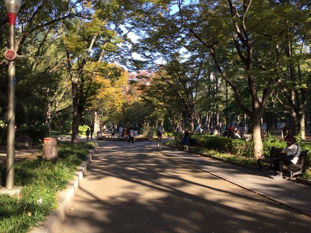 靭公園のケヤキ並木とベンチ