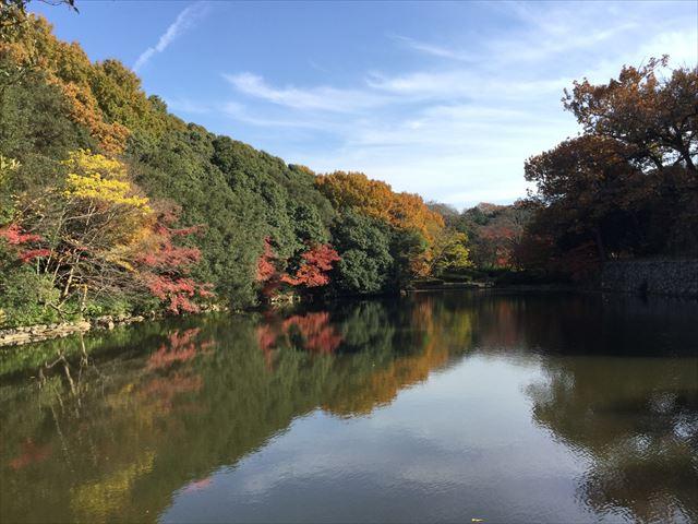 明石公園の桜堀