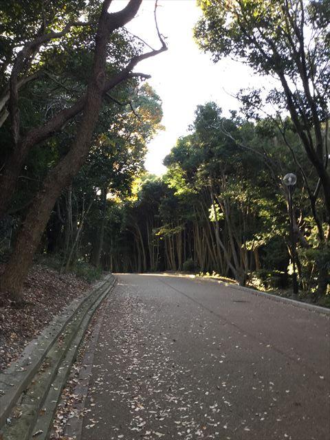 明石公園内の道