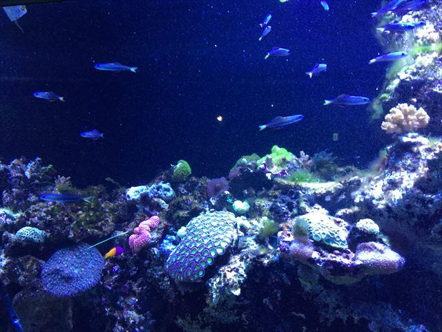 「アクアパーク品川」水槽と魚