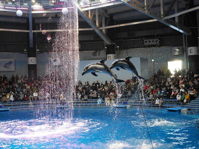 「アクアパーク品川」イルカのジャンプシーン
