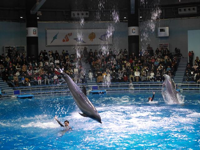 「アクアパーク品川」イルカショー、ジャンプと着水