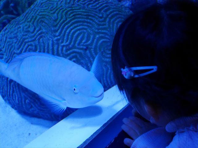 「アクアパーク品川」人懐っこい魚