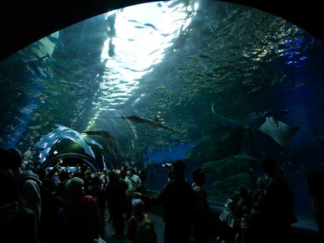 「アクアパーク品川」海中トンネルのような水槽