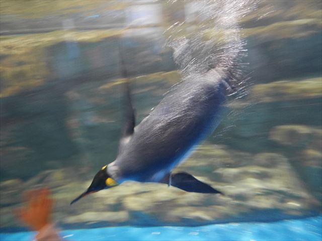 「アクアパーク品川」海中を泳ぐペンギン