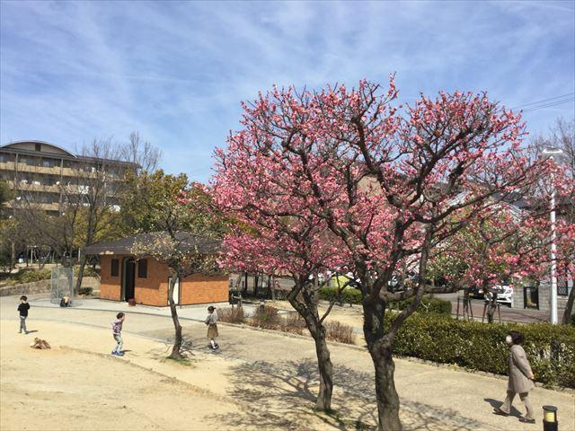 「佐井寺南が丘公園」トイレと梅の木