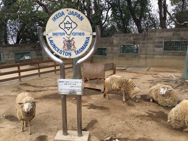 「五月山動物園」羊