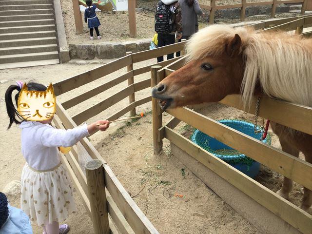 「五月山動物園」ポニーにおやつのニンジンをあげる子供