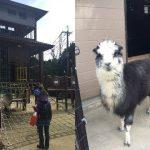 五月山公園の遊具と五月山動物園のアルパカ