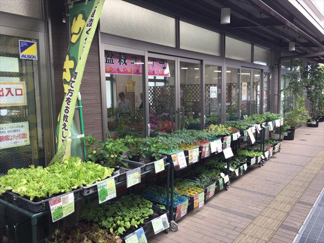 道の駅「愛彩ランド」野菜の苗コーナー