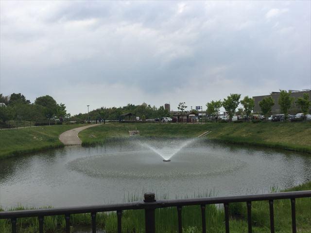 道の駅「愛彩ランド」の池