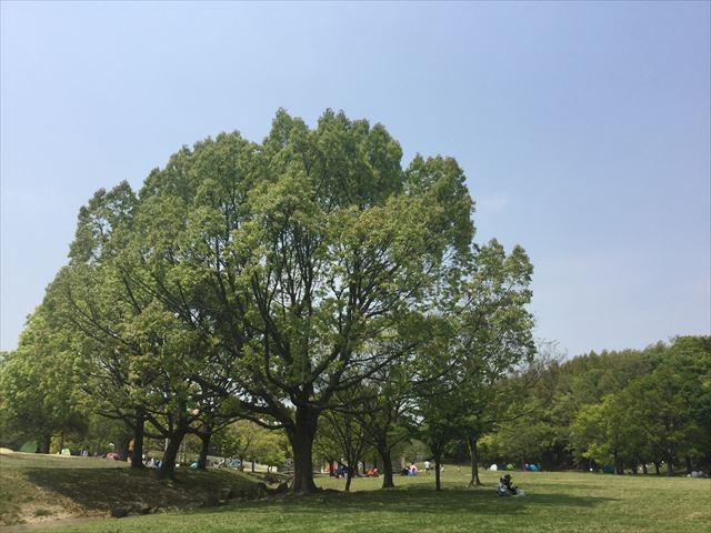 蜻蛉池公園の芝生広場と大きな木