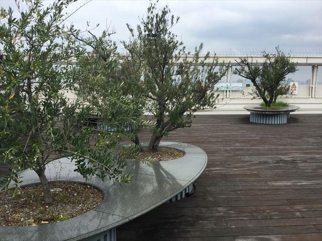 大丸心斎橋店北館屋上庭園、ベンチと植物