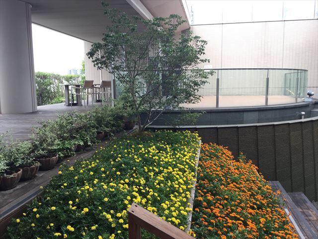 大丸心斎橋店北館屋上庭園、花壇