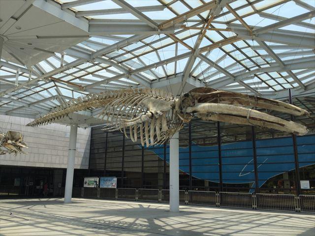 「大阪市立自然史博物館」入口の恐竜の化石