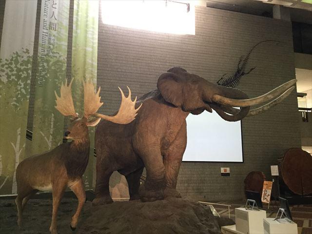 大阪市立自然史博物館、ナウマンゾウとヤベオオツノジカ