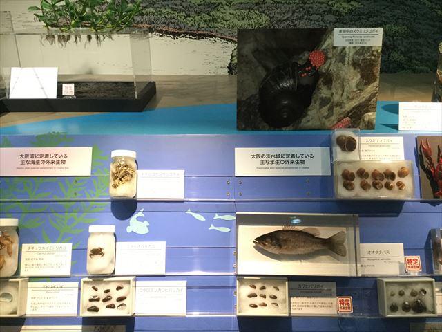 「大阪市立自然史博物館」の大阪に生息している生きもの