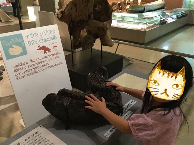 「大阪市立自然史博物館」化石に触ることができる