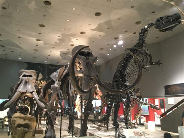 「大阪市立自然史博物館」ナウマンゾウなどの化石