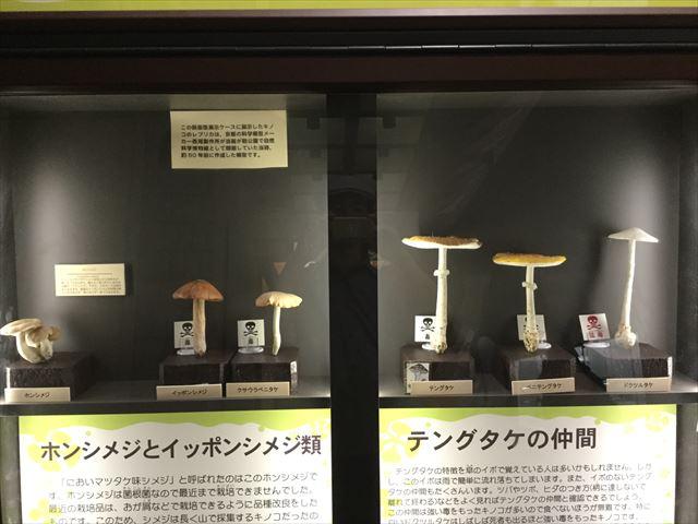 「大阪市立自然史博物館」きのこエリア