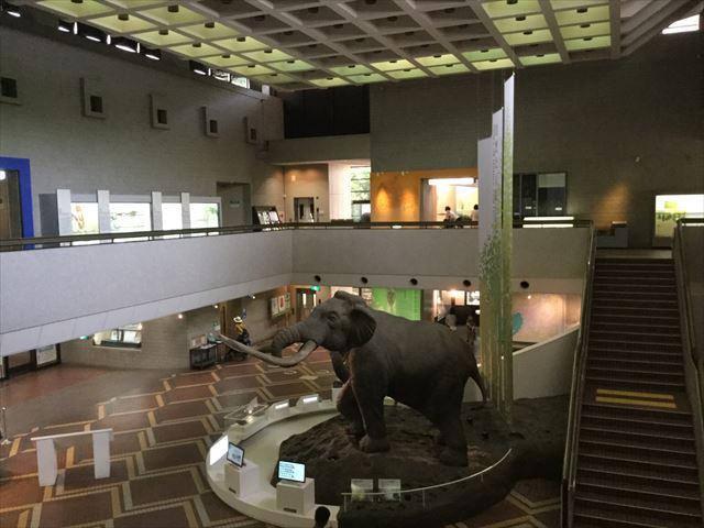 「大阪市立自然史博物館」2階から見た1階のナウマンゾウの様子