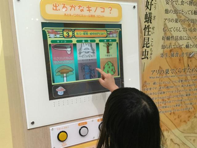 「大阪市立自然史博物館」キノコとその環境、植物をあわせるゲーム