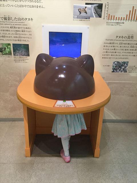 「大阪市立自然史博物館」タヌキの目線で見られる映像