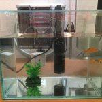 「GEX Glassterior250」に金魚を入れかえた