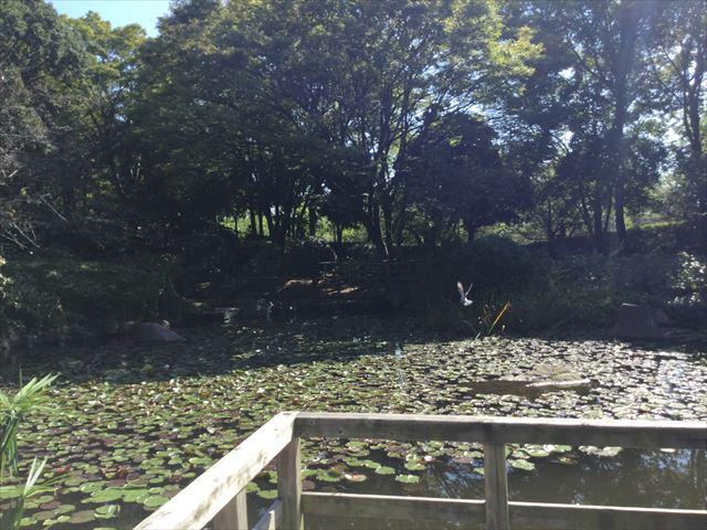 元浜緑地「もみじ池」