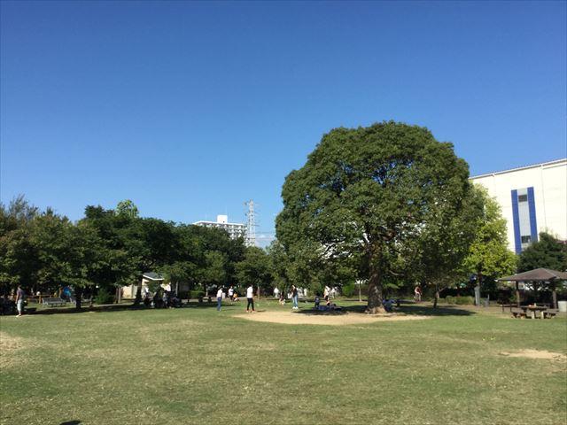 元浜緑地の芝生広場、木が目印