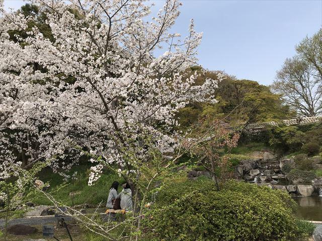須磨離宮公園「植物園」咲くサクラと「みどり滝」