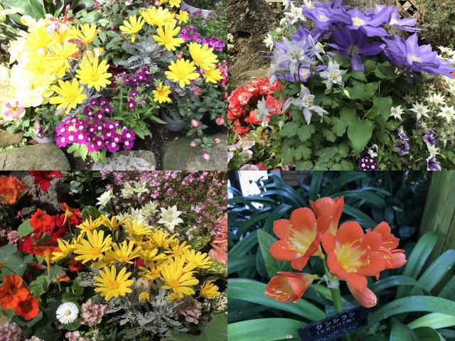 須磨離宮公園「植物園」鑑賞温室の花たち