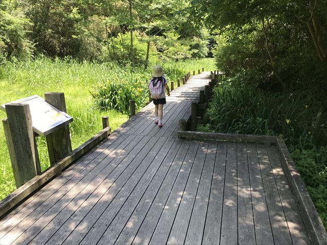 むろいけ園地、水辺自然公園をハイキング、湿生花園を歩く娘