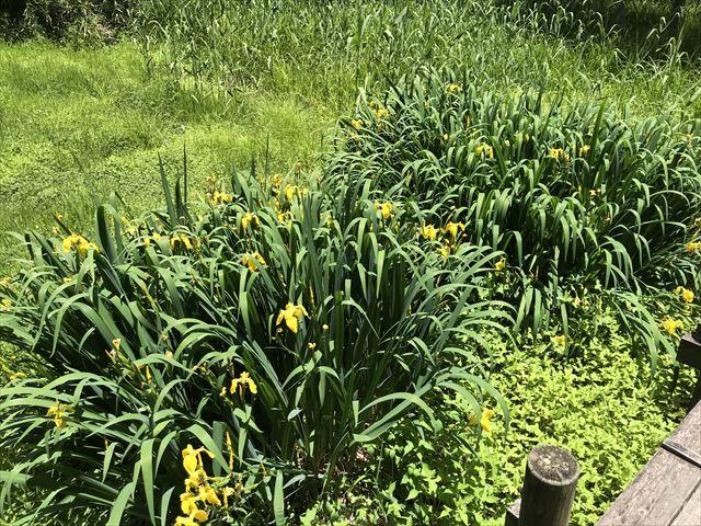 むろいけ園地、水辺自然公園をハイキング、湿生花園に咲く花