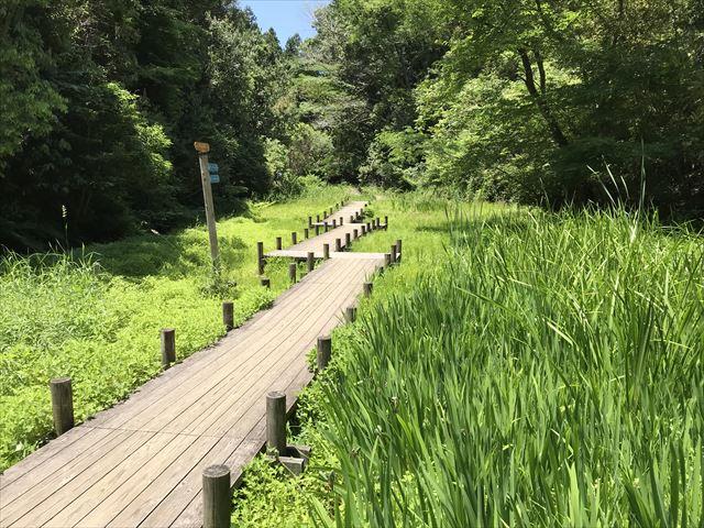 むろいけ園地、水辺自然公園をハイキング、木の道がL字型につながっている