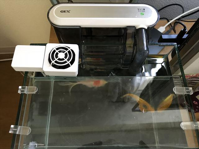 水槽冷却ファンGEX「アクアクールファン・レギュラー」本体を水槽に取り付けた様子