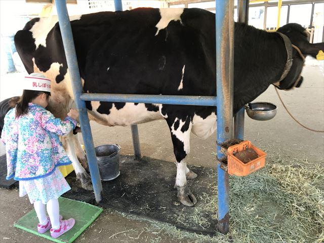 淡路島牧場、乳しぼり体験をしている娘