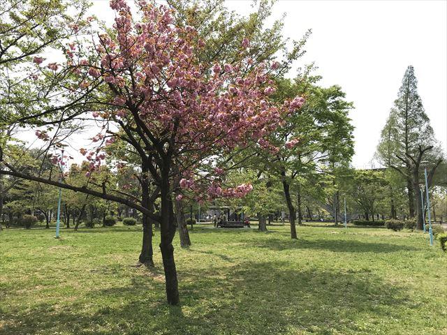 城北公園「桜広場」の様子