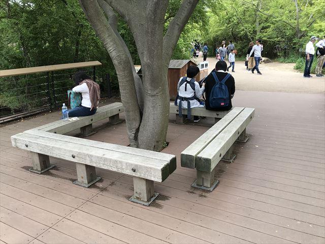 天王寺動物園、木に囲まれてあるベンチ「アフリカサバンナエリア」