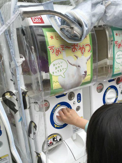 「天王寺動物園」ヒツジとヤギのエサ自動販売機でエサを買っている様子