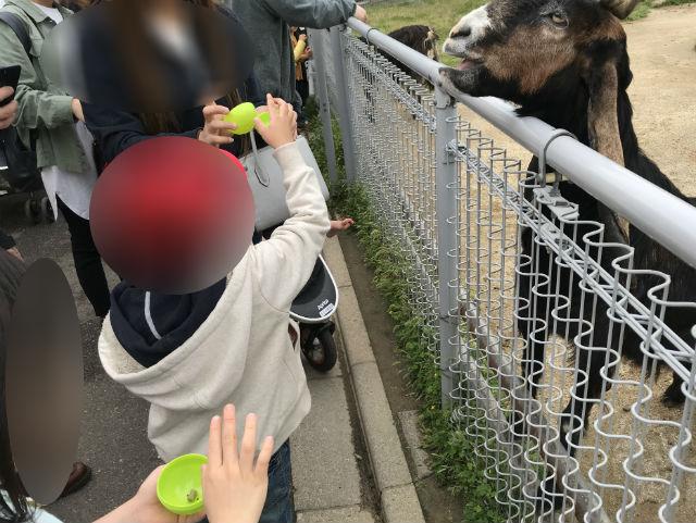 「天王寺動物園」ふれあい広場のヤギにエサやりをしている子供たち
