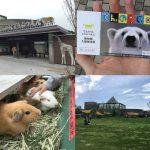 天王寺動物園の4枚の写真(入口、入園券、テンジクネズミ[モルモット]、てんしば)